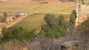 Lower Chuparosa Vineyard