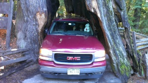 Exiting the Redwood Tree