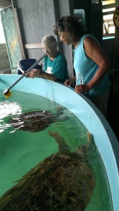 Turtle Conservation Center on South Padres Island, TX