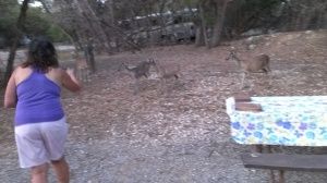 Sherry feeding deer at our campsite