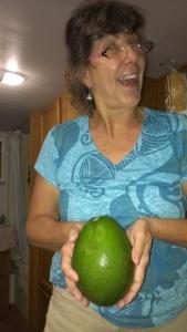 HUGE avocados grown in Florida