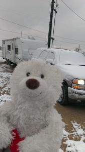 "Louie taking a ""selfie"" in snowy Fort Stockton Texas"