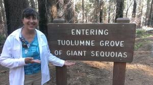 Sherry on the original entrance road into Yosemite, through Giant Sequoias