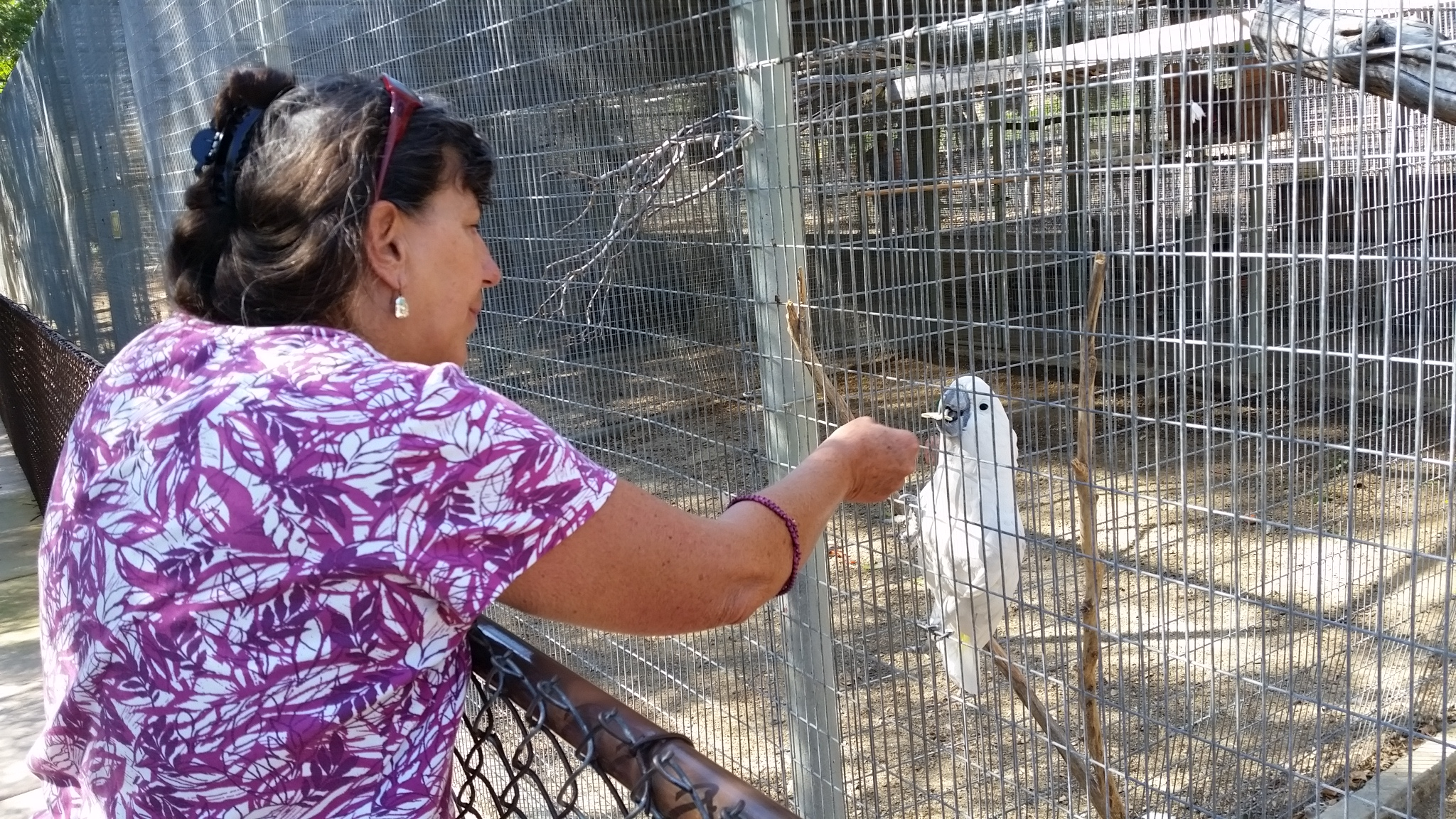2017-09-16 Sherry with Julie the Cockatoo in Santa Paula CA